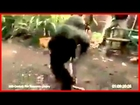 Video Lucu Hampir Mati Di Tembak Sama Monyet