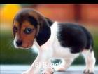 Top 10 Best Pet Dogs of 2014