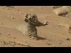 HUMANOIDS GALORE ON THE PLANET MARS?