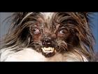 Random Video Friday - Ugly dog