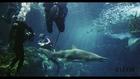Rihanna avec des requins Harper's Bazaar
